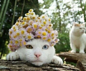 cat, flowers, and happy image