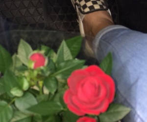 rose and vans image