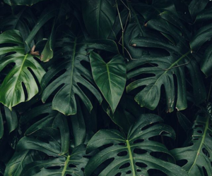 aesthetic, green, and leafs image