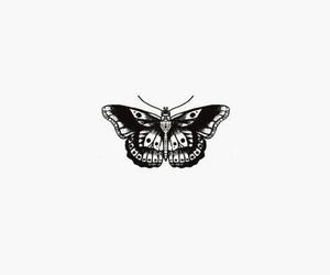 blanco, mariposa, and fondo image