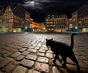 black cat, cat, and city image