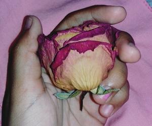 amigo, flores, and flowers image