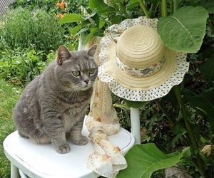 animal, cat, and garden image