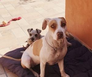 dog, mia, and princess image
