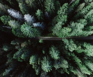green, tree, and forest image