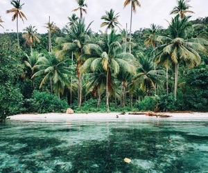 Island, ocean, and palmtrees image