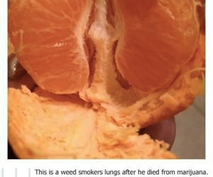 funny, tumblr, and smoke image