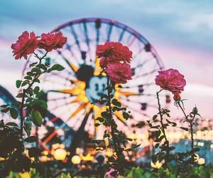 disney, rose, and flowers image