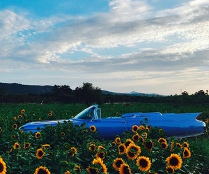 sunflower, car, and blue image