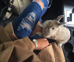 fashion, rabbit, and animal image