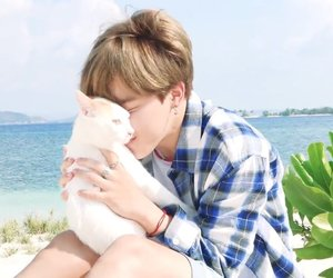 cat, bts, and jimin image