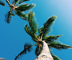fun, holiday, and palms image