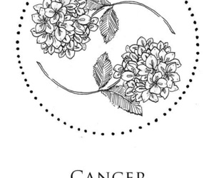cancer, zodiac, and flowers image