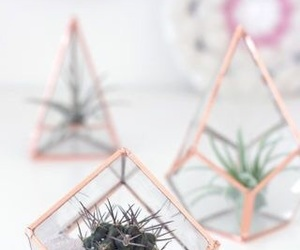 decoration, aesthetic, and cactus image