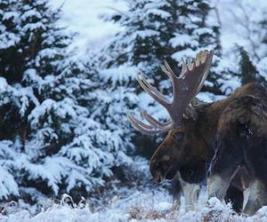 animal, cold, and forest image