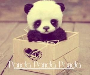 baby, panda, and wallpaper image