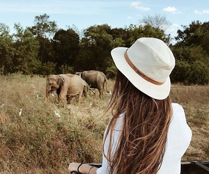elephant, travel, and long hair image