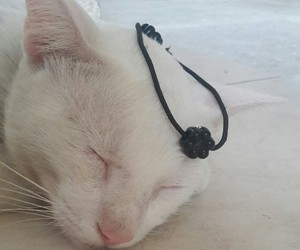 cat, lindo, and gato image