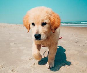 animal, dog, and beach image