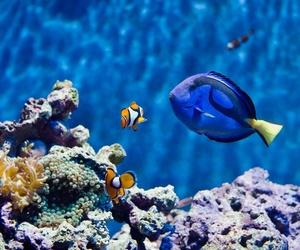 aquarium, dory, and ocean image
