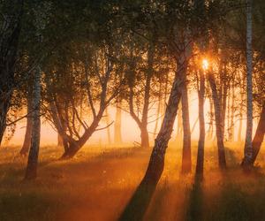 dreams, seasons, and fog image