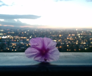 flower, photography, and sunset image
