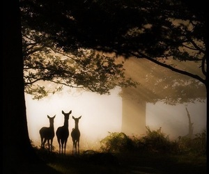Image by naturelandscapelife