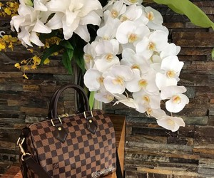 Louis Vuitton and speedy image