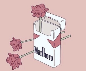 rose, marlboro, and wallpaper image