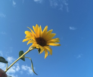 sky, sunflower, and yellow image