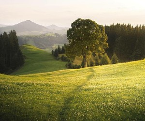 nature, meadow, and tree image