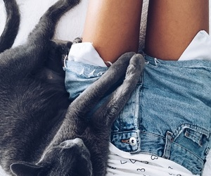 cat, grey, and jeans image