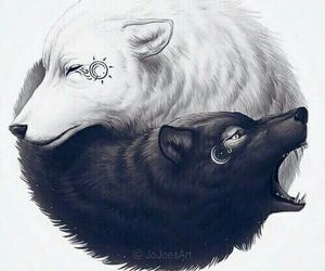 wolf, white, and black image