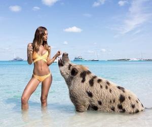 girl, pig, and animal image