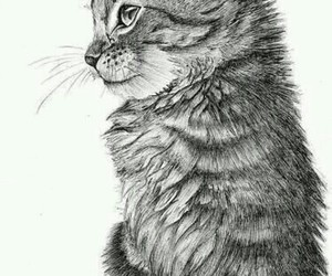 art, drawing, and kitten image