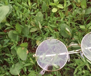 aesthetic, glasses, and grass image