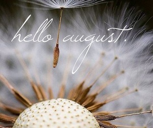 August, dandelions, and summer image