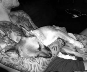 dog, sweet, and loris karius image