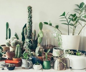 cactus and indie image