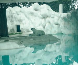 animal, zoo, and oso polar image