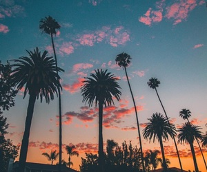 beautiful, california, and palm trees image
