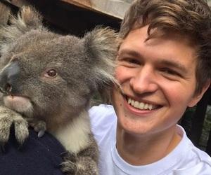 Koala, cute, and ansel elgort image