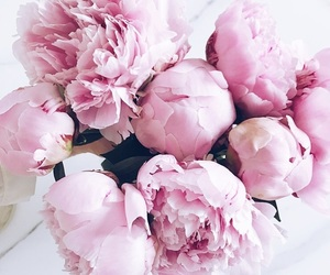 flowers, girly, and inspo image