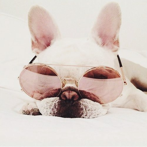 sunglasses, cute, and puppy image