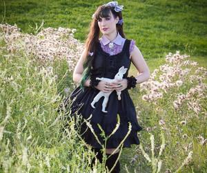 dandylion, field, and lavender image