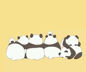 panda and wallpaper image