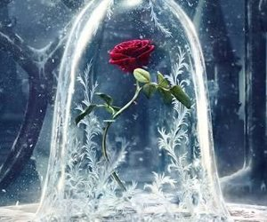 rose, beauty and the beast, and disney image
