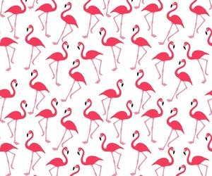 bird, cool, and flamingos image