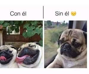 dog, friendship, and meme image
