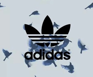 adidas, bird, and wallpaper image